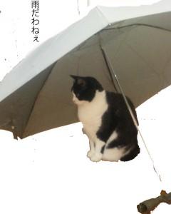 傘をさすあやこ