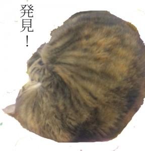 アンモニャイト猫
