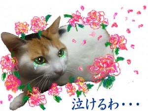 うるうる倉子