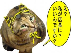 私、本当は猫なんですけど・・・