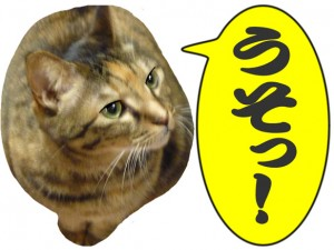 倉子姉さん猫界でいくつよー