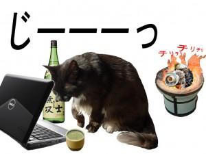 今夜は猫士無双で一杯