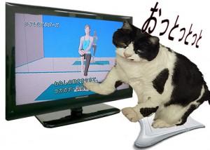 猫のバランス感覚っていったい・・・